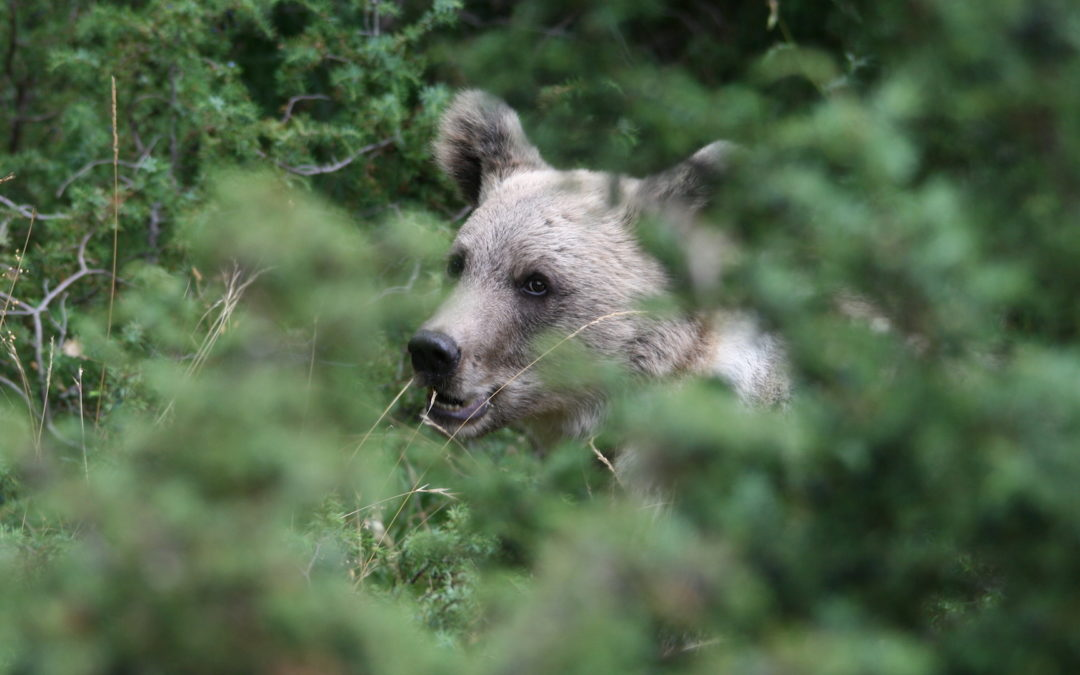 Ours: un voisin mal léché?