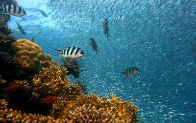 Jonathan Balcombe: « Les poissons se souviennent des visages »